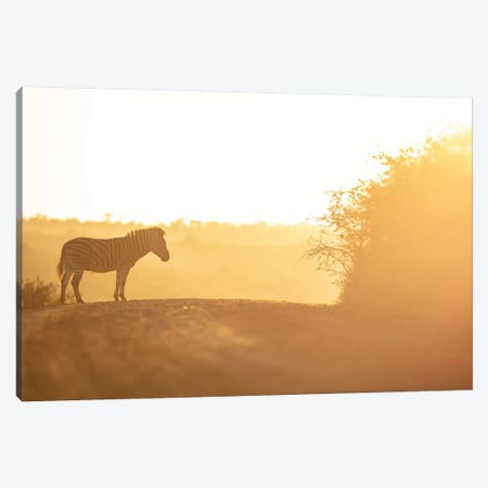 Soon Walking Canvas Print #JOR105} by Anders Jorulf Canvas Artwork