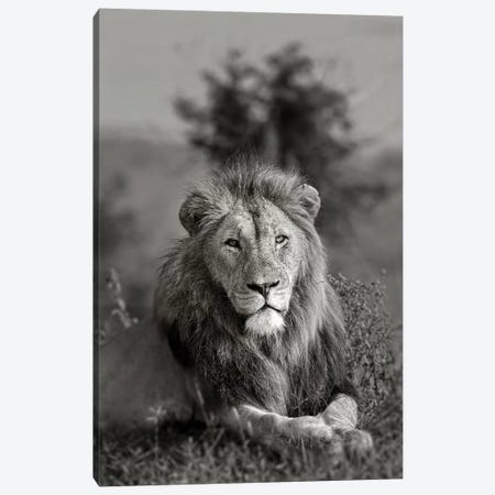 The King Canvas Print #JOR114} by Anders Jorulf Canvas Print