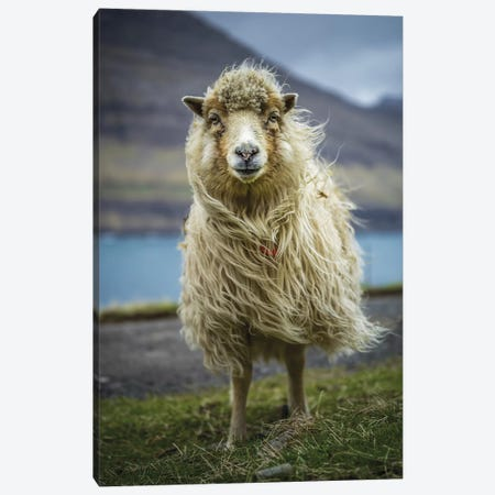 The Sheep Canvas Print #JOR116} by Anders Jorulf Art Print