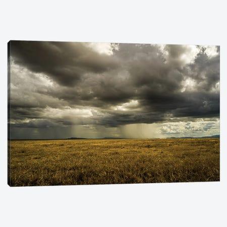 Rain In Serengeti 3-Piece Canvas #JOR127} by Anders Jorulf Canvas Artwork