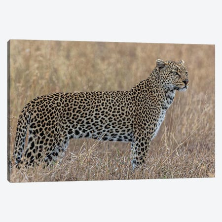Hunting Canvas Print #JOR135} by Anders Jorulf Canvas Art Print