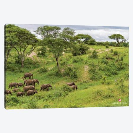 Elephant Heard Canvas Print #JOR136} by Anders Jorulf Art Print