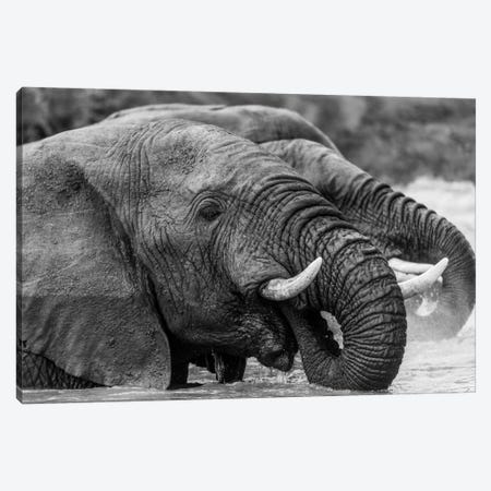 Bathing Elephants Canvas Print #JOR54} by Anders Jorulf Canvas Wall Art