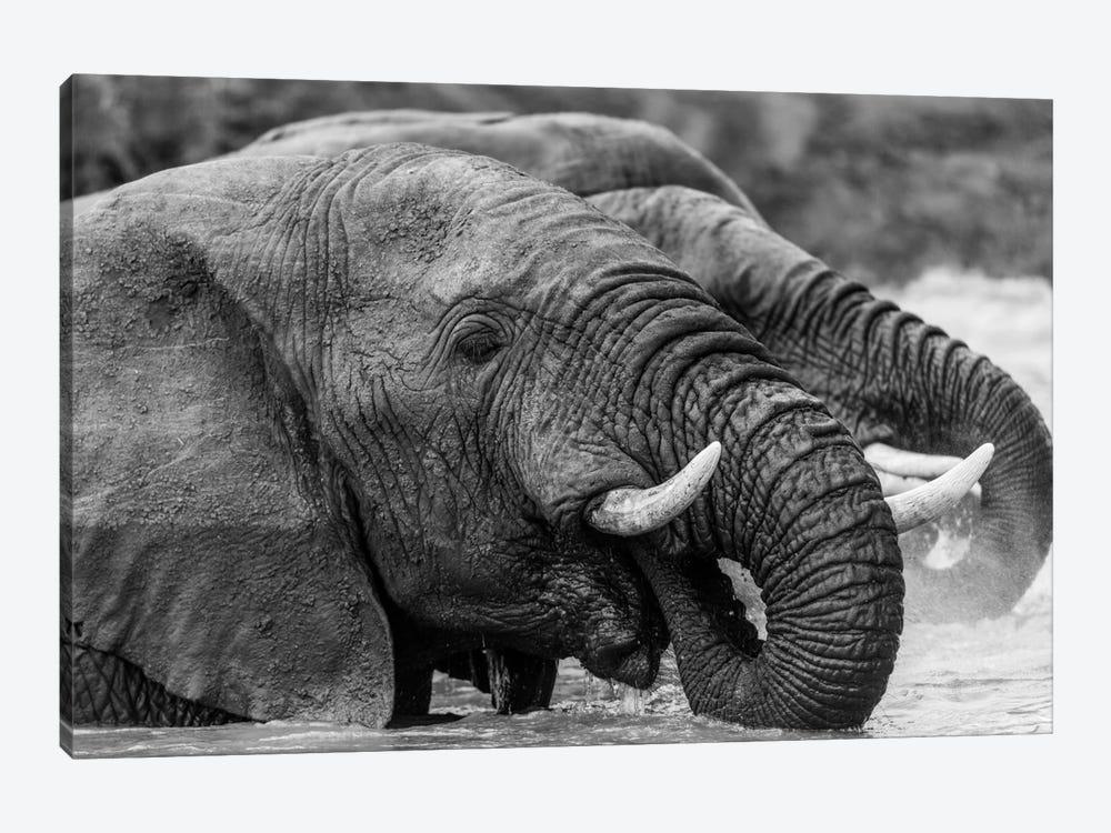 Bathing Elephants by Anders Jorulf 1-piece Canvas Art Print
