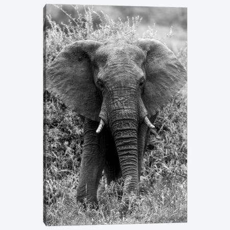 Elephant In The Bush Canvas Print #JOR55} by Anders Jorulf Canvas Wall Art