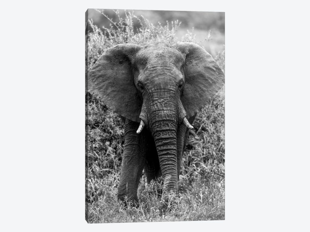 Elephant In The Bush by Anders Jorulf 1-piece Canvas Wall Art