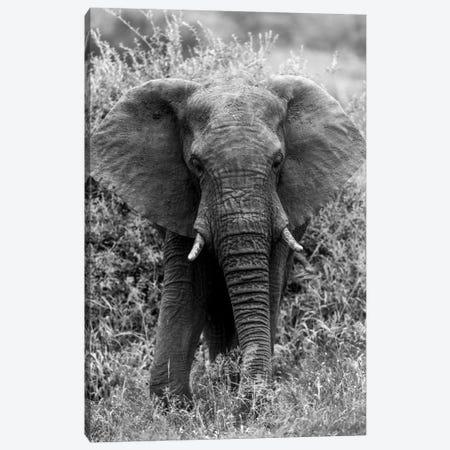 Elephant In The Bush Canvas Print #JOR55} by Anders Jorulf Canvas Wall Art