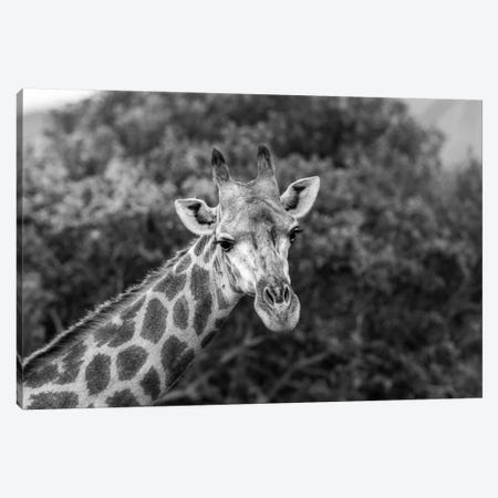 Look At Me, I'm Handsome Canvas Print #JOR56} by Anders Jorulf Canvas Artwork