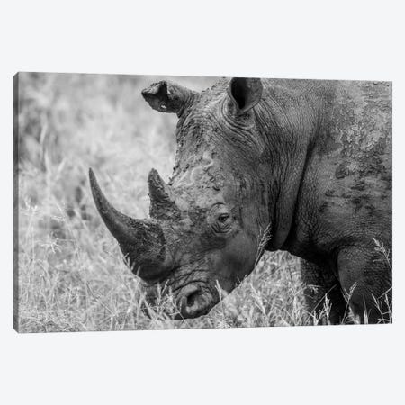 Rhino's Male Canvas Print #JOR57} by Anders Jorulf Canvas Artwork