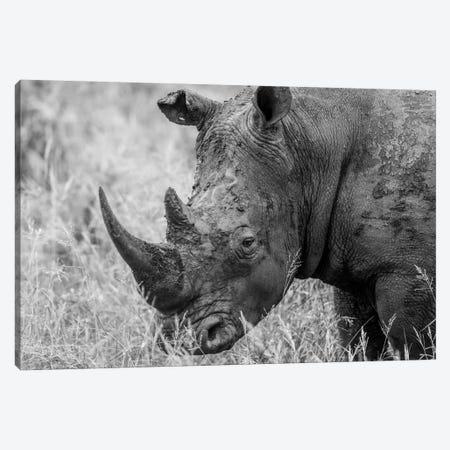 Rhino's Male Canvas Print #JOR57} by Anders Jorulf Canvas Artwork
