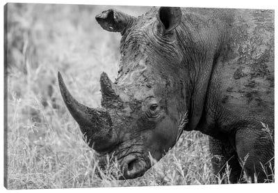 Rhino's Male Canvas Art Print