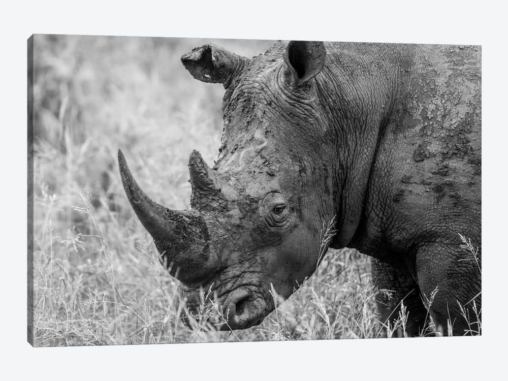 Rhino's Male by Anders Jorulf 1-piece Canvas Art