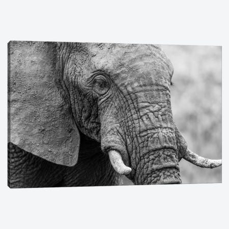 Sleeping Elephant Canvas Print #JOR58} by Anders Jorulf Art Print