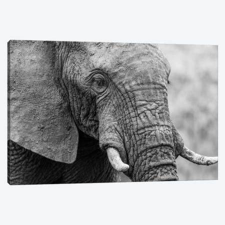 Sleeping Elephant Canvas Print #JOR58} by Anders Jorulf Art Print