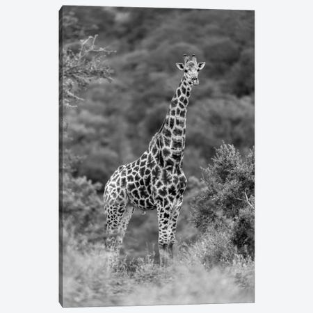 Stately Giraffe Canvas Print #JOR59} by Anders Jorulf Canvas Print