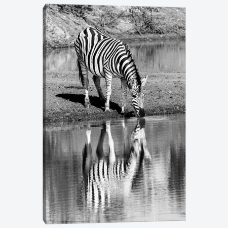 Zebra By The Water Canvas Print #JOR63} by Anders Jorulf Canvas Art