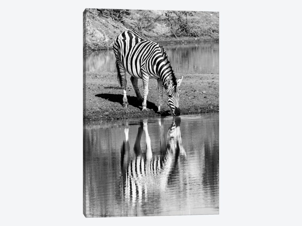 Zebra By The Water by Anders Jorulf 1-piece Canvas Print