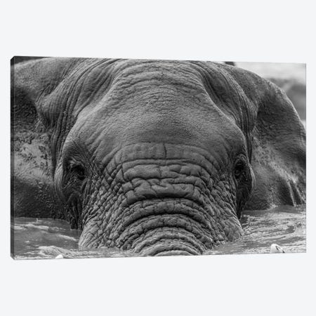Elephant Partially Submerged Canvas Print #JOR64} by Anders Jorulf Canvas Art Print