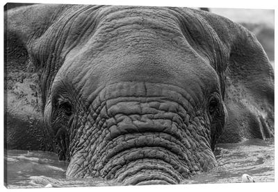 Elephant Partially Submerged Canvas Art Print