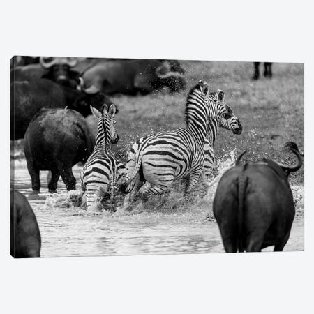 Zebras And Wildebeests Canvas Print #JOR66} by Anders Jorulf Canvas Art Print