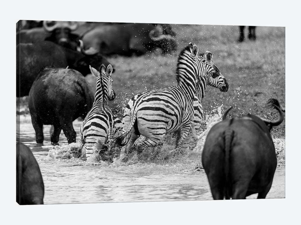 Zebras And Wildebeests by Anders Jorulf 1-piece Canvas Artwork
