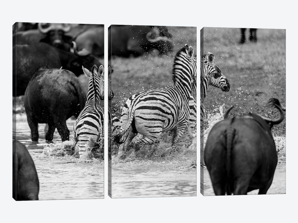 Zebras And Wildebeests by Anders Jorulf 3-piece Canvas Artwork
