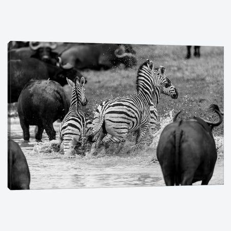 Zebras And Wildebeests Canvas Print #JOR66} by Anders Jorulf Canvas Art Print