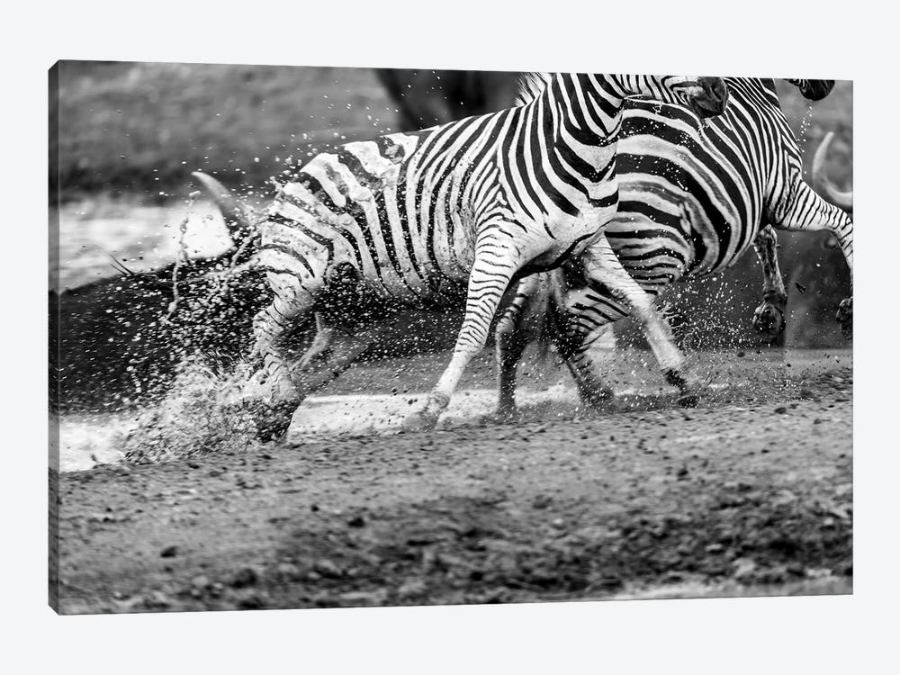Zebras Running by Anders Jorulf 1-piece Canvas Print