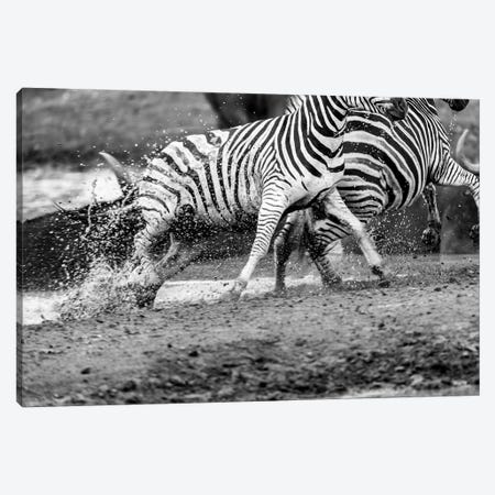 Zebras Running 3-Piece Canvas #JOR67} by Anders Jorulf Canvas Art Print