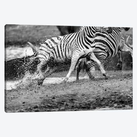 Zebras Running Canvas Print #JOR67} by Anders Jorulf Canvas Art Print