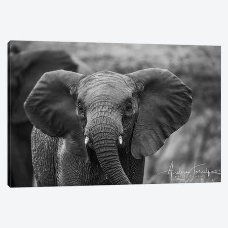 Baby Elephant Canvas Print #JOR68} by Anders Jorulf Canvas Wall Art