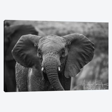 Baby Elephant Canvas Print #JOR68} by Anders Jorulf Canvas Wall Art