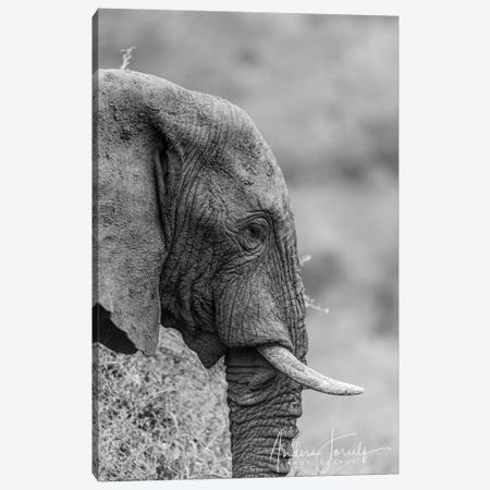 The Silent Elephant Canvas Print #JOR79} by Anders Jorulf Canvas Print