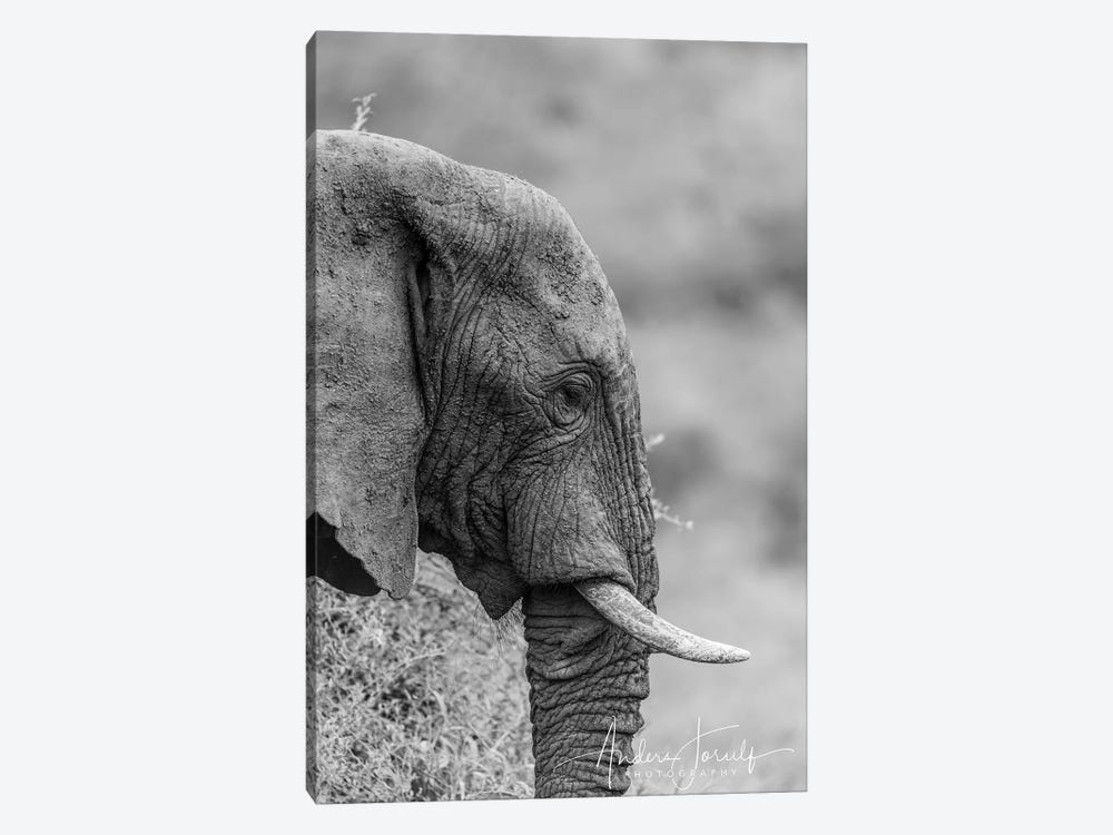 The Silent Elephant by Anders Jorulf 1-piece Canvas Artwork