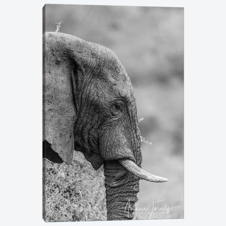 The Silent Elephant Canvas Print #JOR79} by Anders Jorulf Canvas Print
