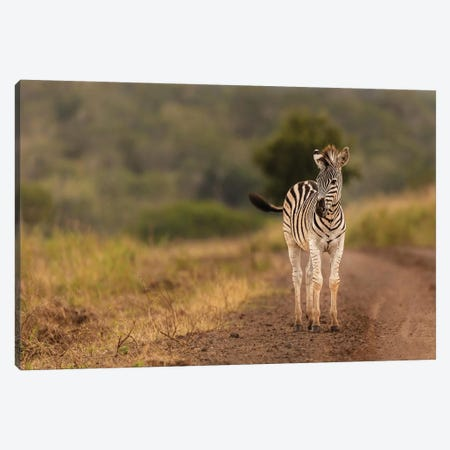 Alone In The Wild Canvas Print #JOR83} by Anders Jorulf Canvas Artwork