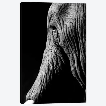 Elephant Canvas Print #JOR87} by Anders Jorulf Canvas Print