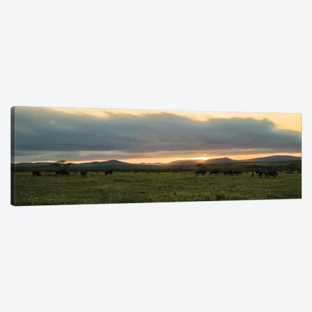 Evening In The Wild Canvas Print #JOR88} by Anders Jorulf Canvas Wall Art