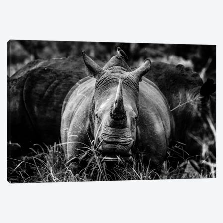 The Rhino Canvas Print #JOR91} by Anders Jorulf Canvas Print