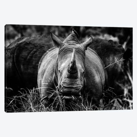 The Rhino Canvas Print #JOR91} by Anders Jorulf Canvas Print