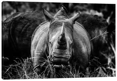 The Rhino Canvas Art Print