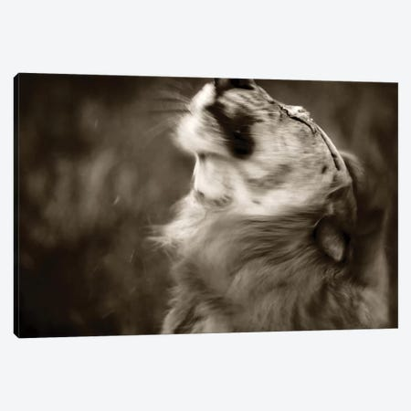 Lion Canvas Print #JOR93} by Anders Jorulf Canvas Print
