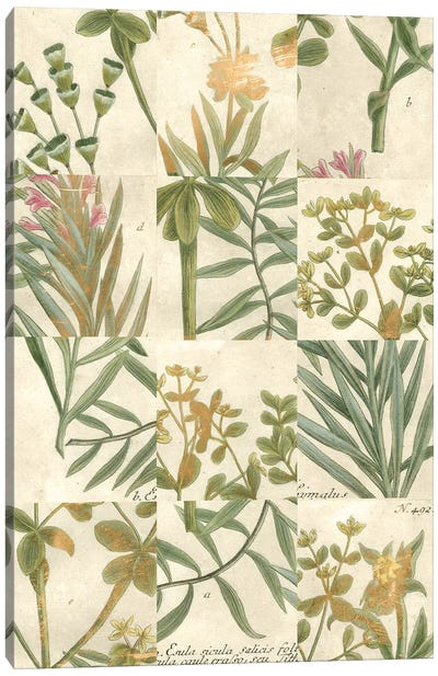Garden Grid II Canvas Art Print