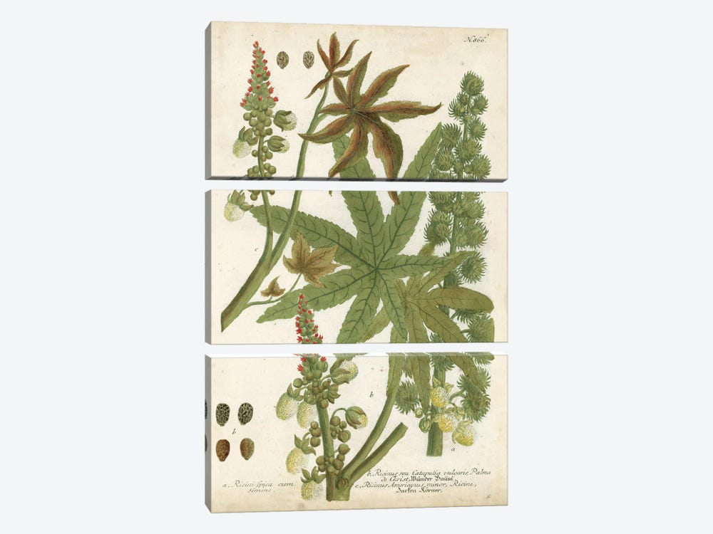 Weinmann Tropical Plants I by Johann Weinmann 3-piece Canvas Print