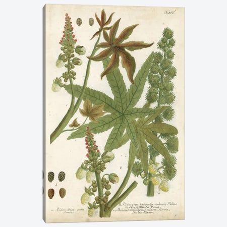 Weinmann Tropical Plants I Canvas Print #JOW4} by Johann Wilhelm Weinmann Canvas Art Print