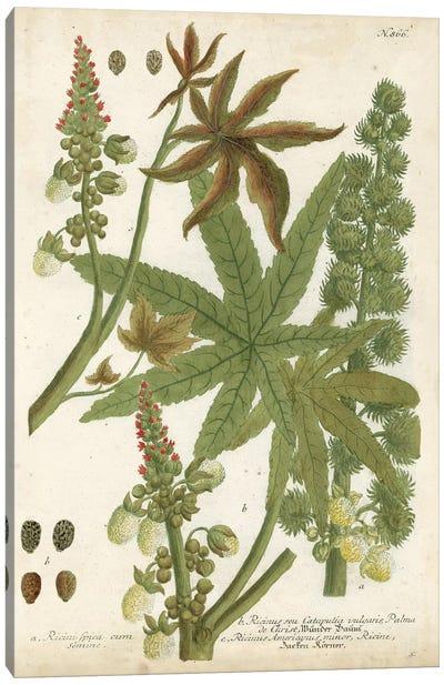 Weinmann Tropical Plants I Canvas Art Print