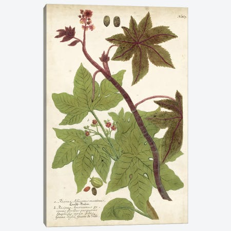 Weinmann Tropical Plants II Canvas Print #JOW5} by Johann Wilhelm Weinmann Canvas Art Print