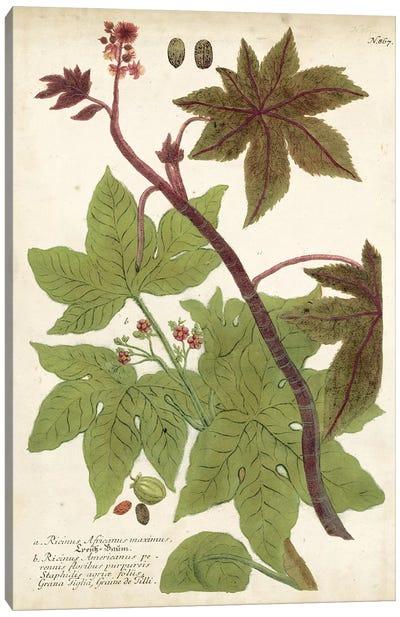 Weinmann Tropical Plants II Canvas Art Print
