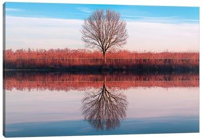 Windtree Canvas Art Print