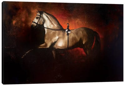 Dressage, A Horses View Canvas Art Print
